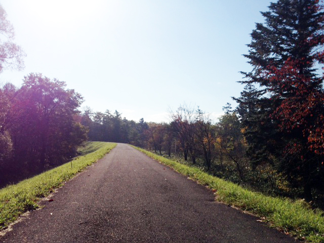 2013年10月18日 見本林の中の道